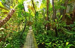 Fairfax Tropics