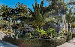 Allesandro Palms