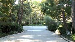 Century Woods