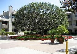 Century Hill